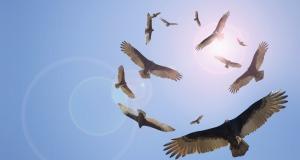 Vultures_EN-US469178579